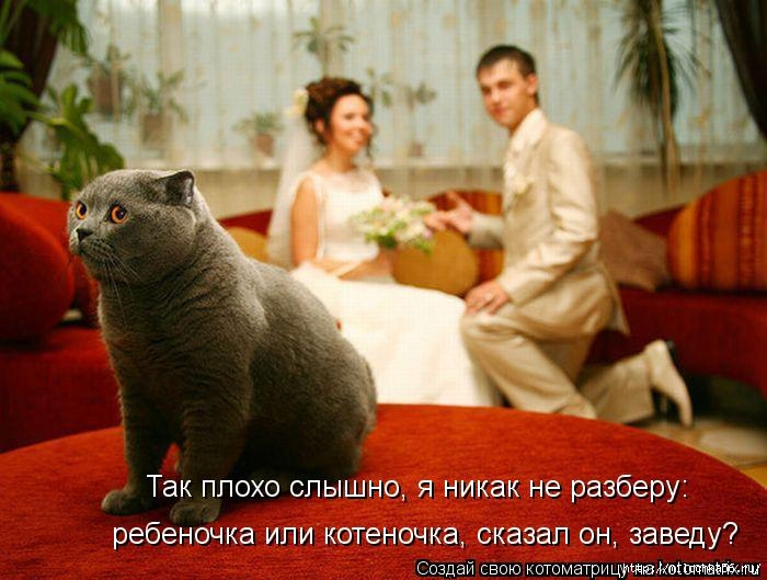 1382543473_kotomatritsa_jv (700x529, 209Kb)