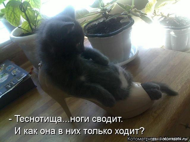 1382543474_106343339_large_kotomatritsa_ie (640x480, 141Kb)