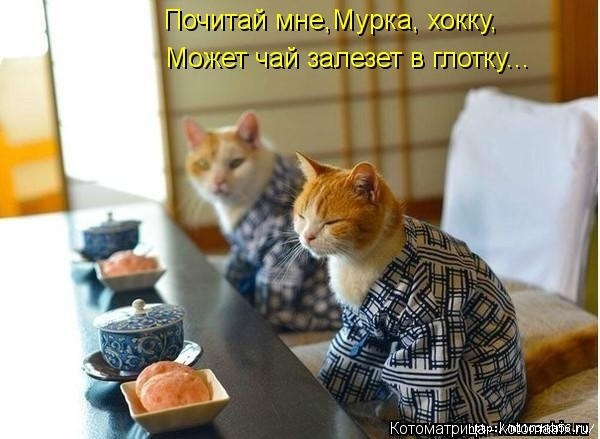 1382543487_kotomatritsa_iq (600x439, 133Kb)