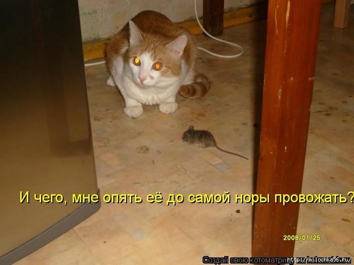 1382543516_kotomatritsa_h1e (700x524, 206Kb)