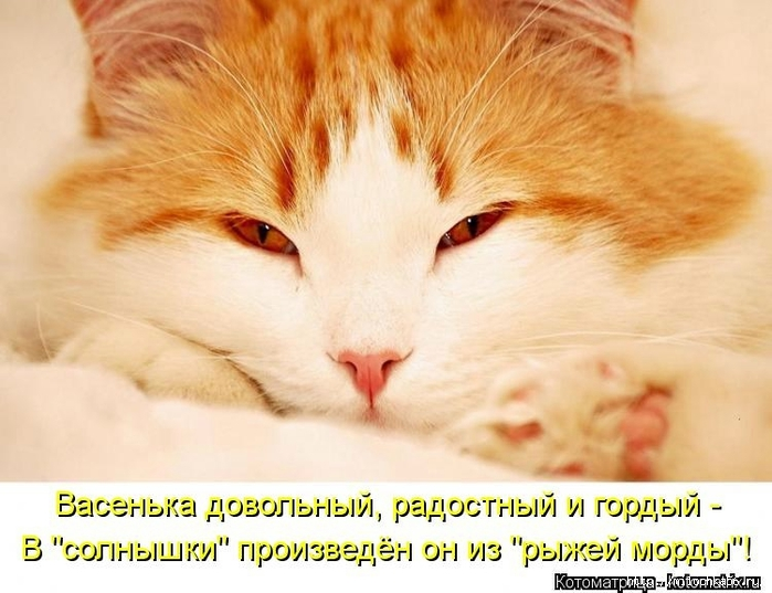 1382543520_106343330_large_kotomatritsa_ra (700x537, 243Kb)