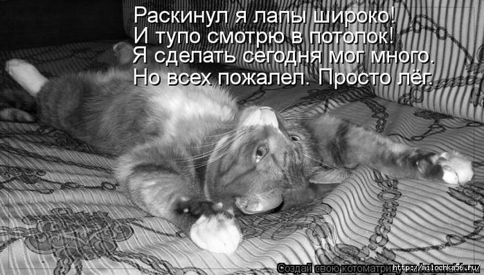 1382543523_kotomatritsa_db (700x398, 226Kb)
