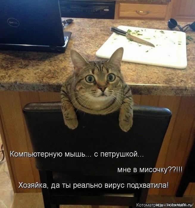 1382543527_106343355_large_kotomatritsa_zn (655x700, 319Kb)