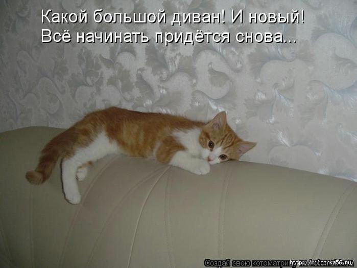 1382543529_106343349_large_kotomatritsa_xi (700x524, 185Kb)
