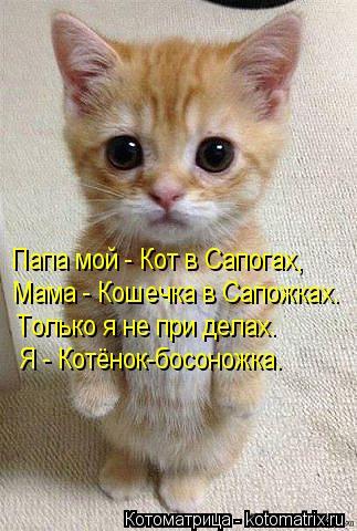 1382543557_kotomatritsa_he (323x480, 171Kb)