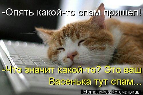 kotomatritsa_q (500x331, 93Kb)