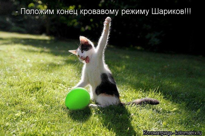kotomatritsa_8t (700x466, 219Kb)