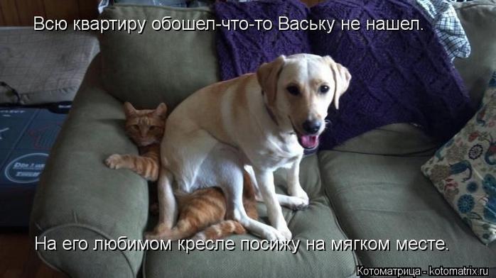 kotomatritsa_p8 (700x392, 178Kb)