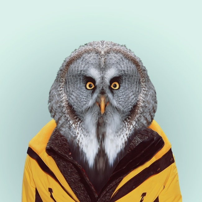 zoo portraits yago partal  (2)