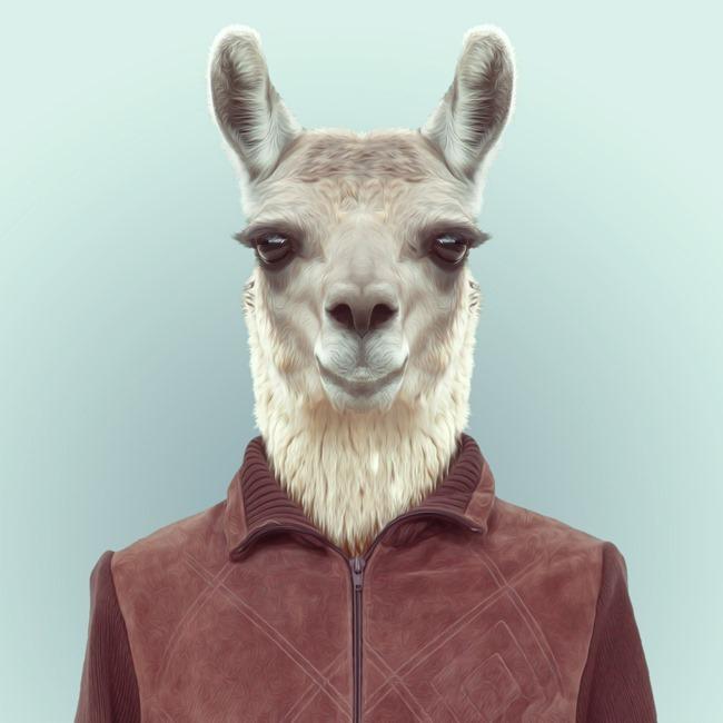 zoo portraits yago partal  (14)