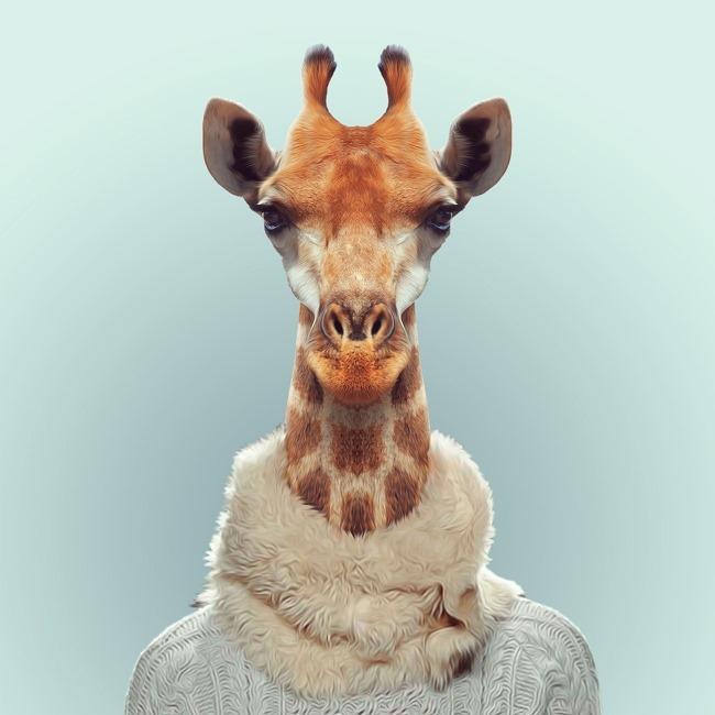 zoo portraits yago partal  (18)