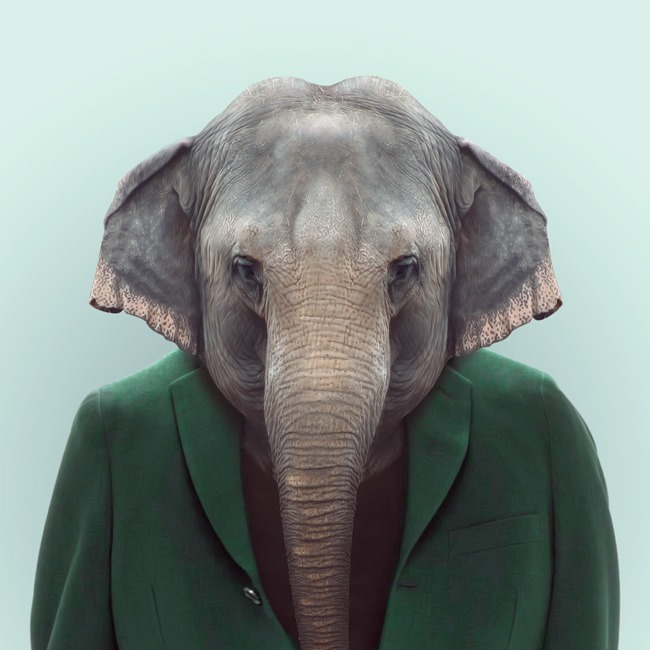 zoo portraits yago partal  (32)
