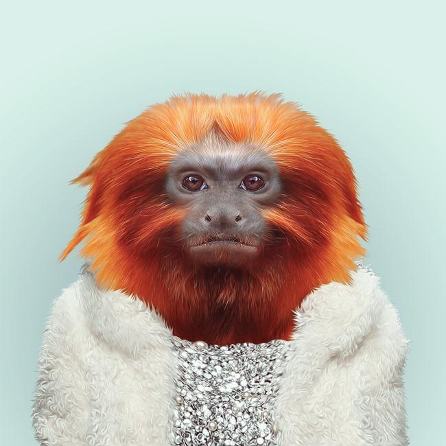 zoo portraits yago partal  (42)