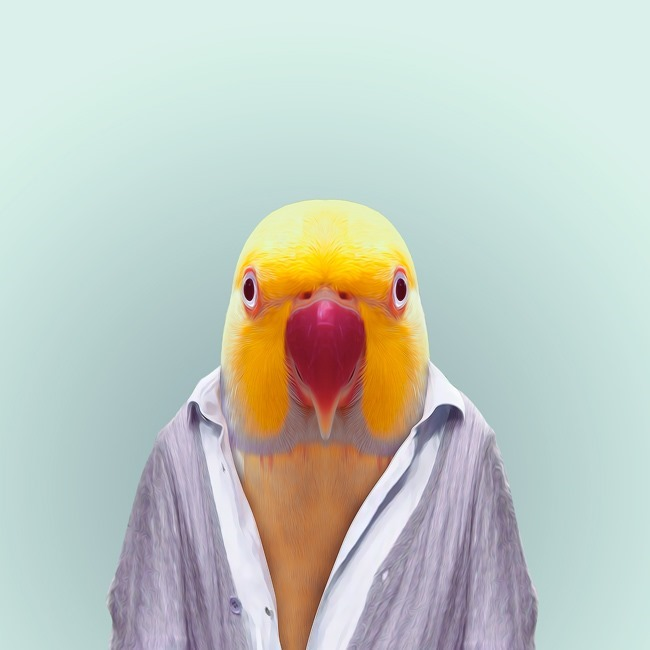 zoo portraits yago partal  (52)