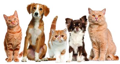 домашние_животные (400x212, 133Kb)
