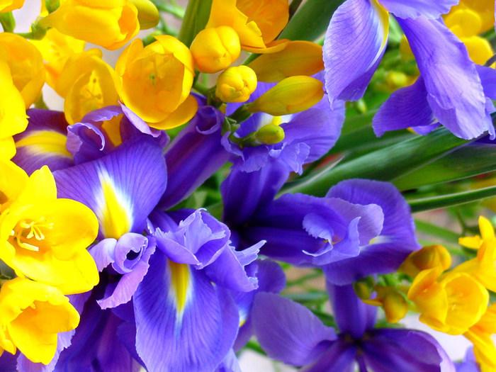 Orchidea_flowers_wallpapers (700x525, 126Kb)