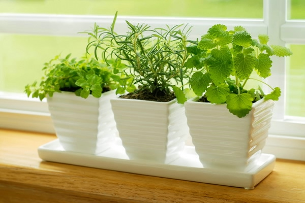 windowsill-decorating-ideas-plants6 (600x400, 127Kb)