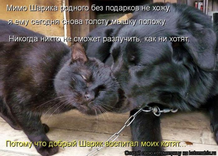 1384712160_cm_20131115_03379_024 (700x503, 206Kb)
