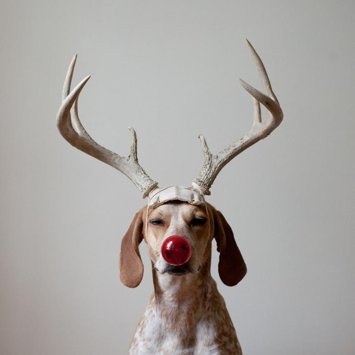 собака фотографа   (700x700, 252Kb)