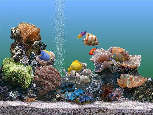 аквариум (640x480, 92Kb)