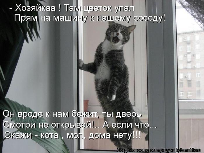 kotomatritsa_3i (700x524, 214Kb)