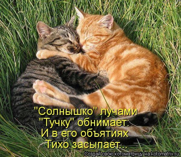 kotomatritsa_bf (600x522, 303Kb)