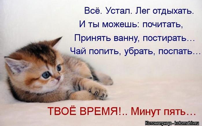 kotomatritsa_Ds (700x436, 182Kb)