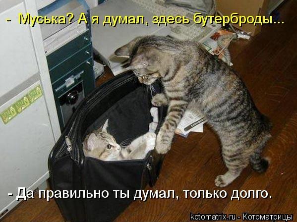 kotomatritsa_M (599x448, 134Kb)