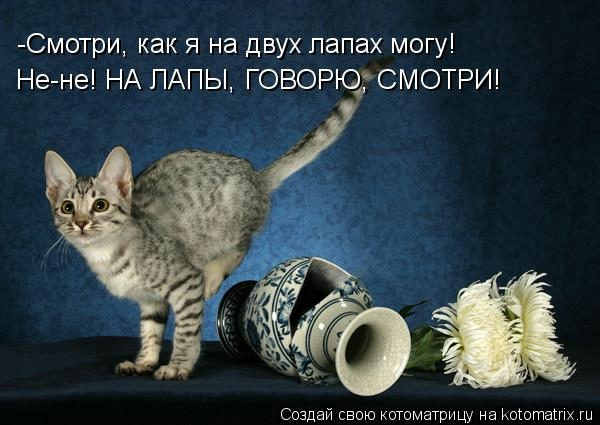 kotomatritsa_Q (600x425, 115Kb)