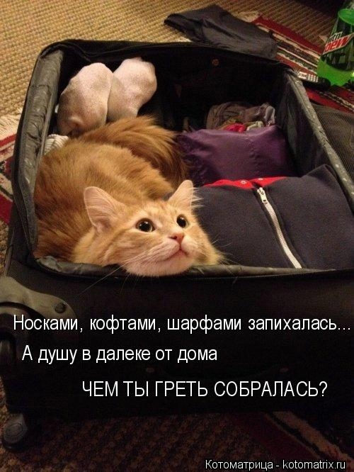 kotomatritsa_un (500x666, 167Kb)