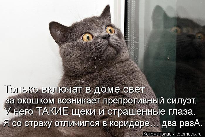 kotomatritsa_Zz (699x466, 188Kb)