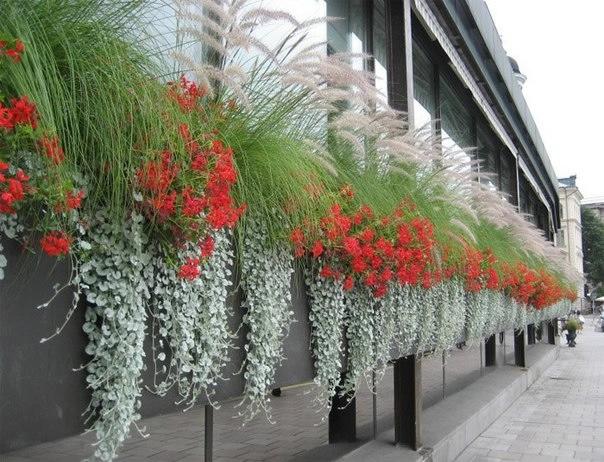Progettare un balcone fiorito forum di - Silver la porta di liv ...