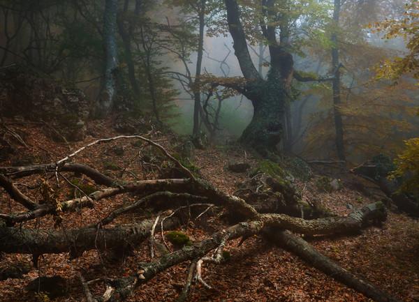 В заколдованном лесу (600x433, 117Kb)