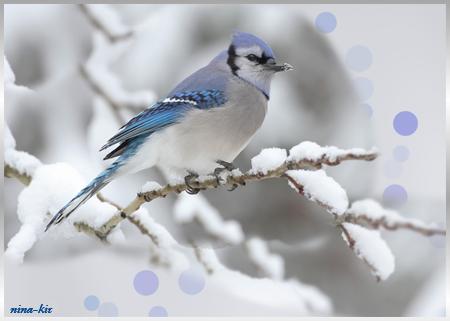 Птичка-на-ветке.Зима (450x321, 167Kb)