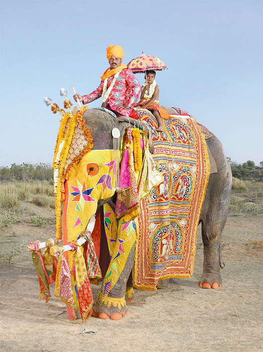 парад слонов джайпур 3 (524x700, 501Kb)