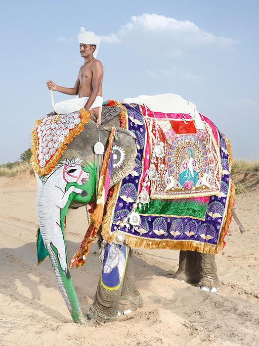 парад слонов джайпур 5 (524x700, 471Kb)