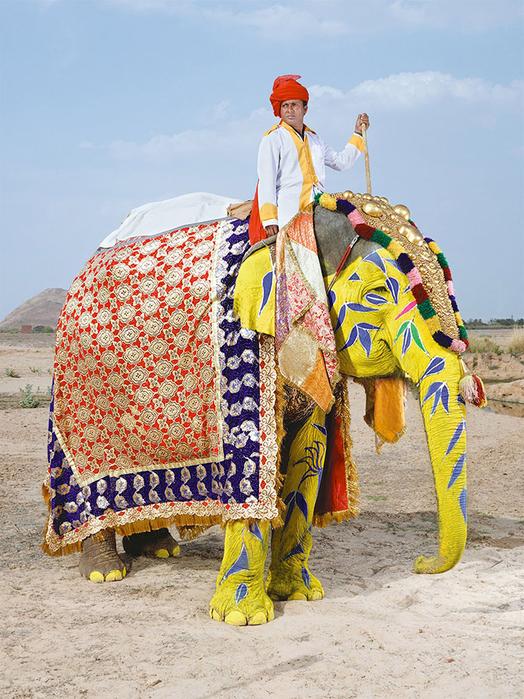 парад слонов джайпур 6 (524x700, 504Kb)