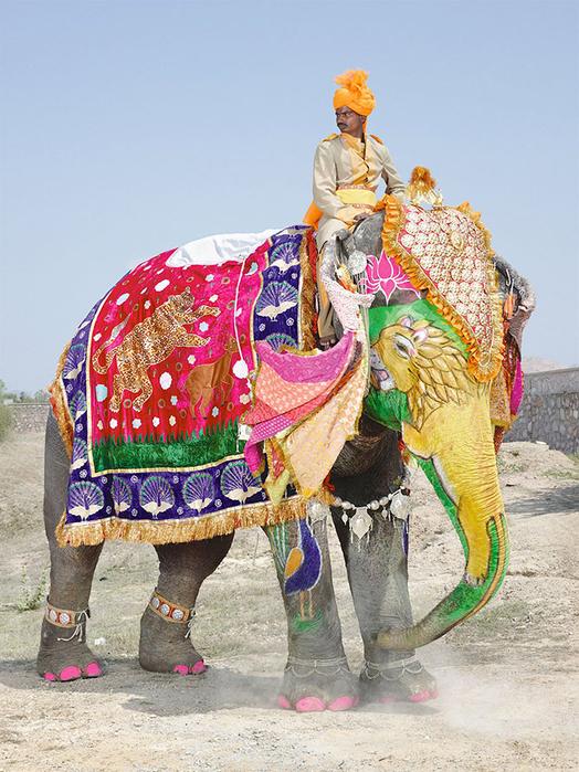 парад слонов джайпур 8 (524x700, 470Kb)
