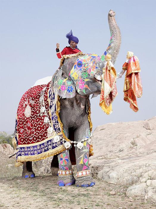 парад слонов джайпур 10 (524x700, 442Kb)