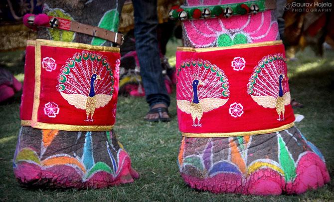 парад слонов джайпур 12 (670x405, 335Kb)