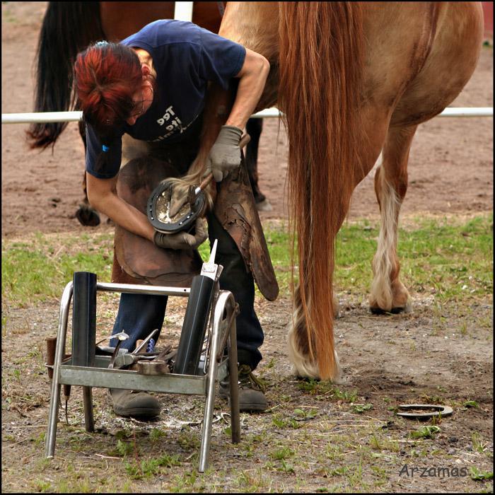 коваль подковывает лошадь