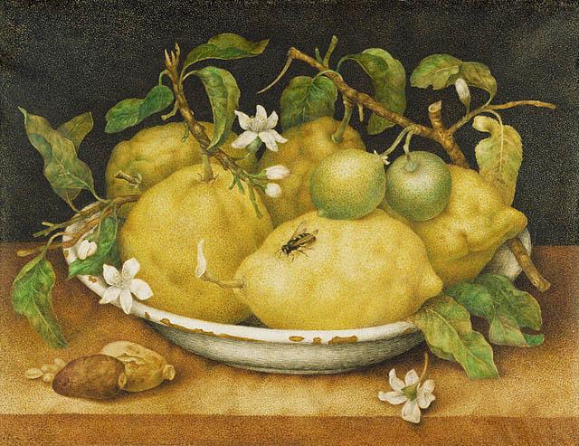 Дж. Гарцони. Натюрморт с лимоном. 1640 (640x493, 99Kb)