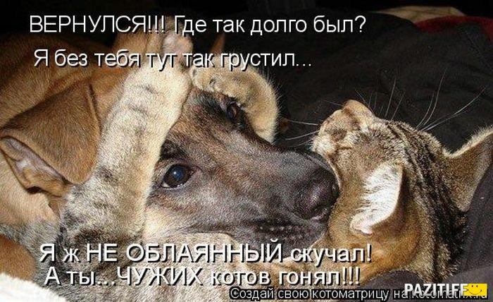 1318796325_kotomatrix_09 (700x428, 243Kb)