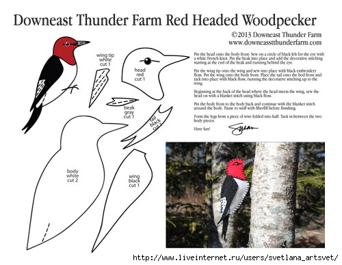 5341674_redheadedwoodpeckerpic500x387 (500x387, 113Kb)