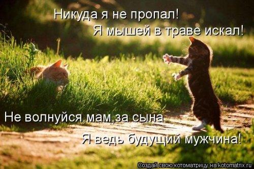 1350051335_kotomatrix-121012-4 (500x332, 195Kb)