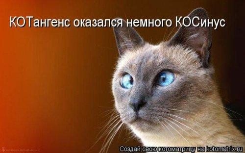 1350051355_kotomatrix-121012-38 (500x312, 115Kb)