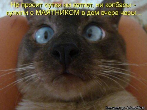 1350051383_kotomatrix-121012-15 (500x375, 137Kb)