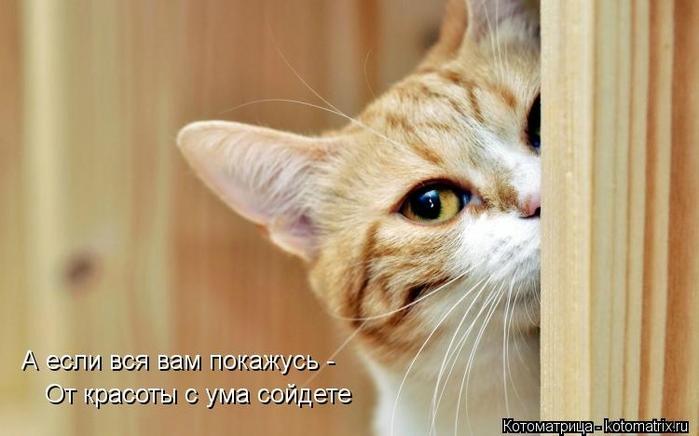 kotomatritsa_0s (700x436, 166Kb)