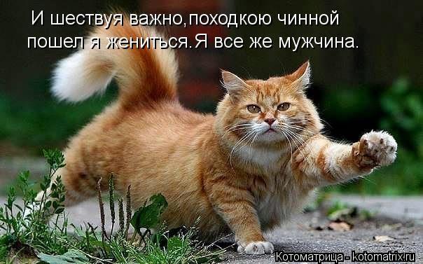 kotomatritsa_9q7 (604x377, 126Kb)