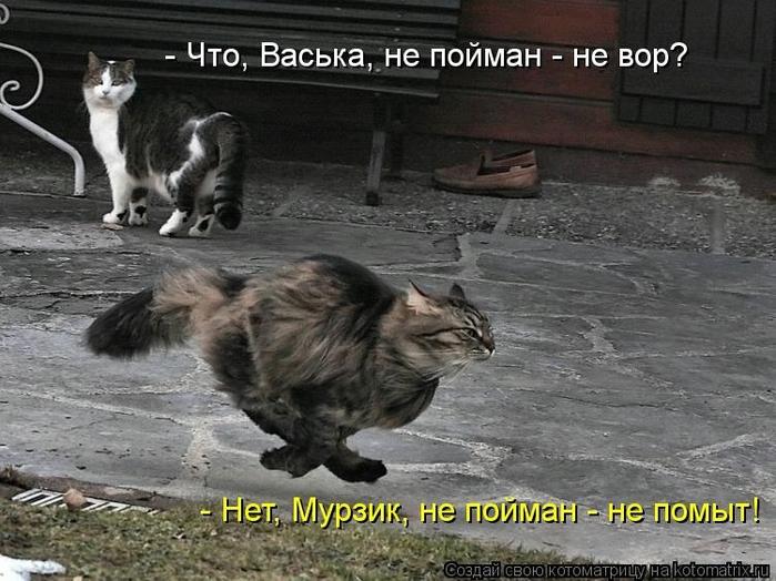 kotomatritsa_c2 (700x524, 267Kb)